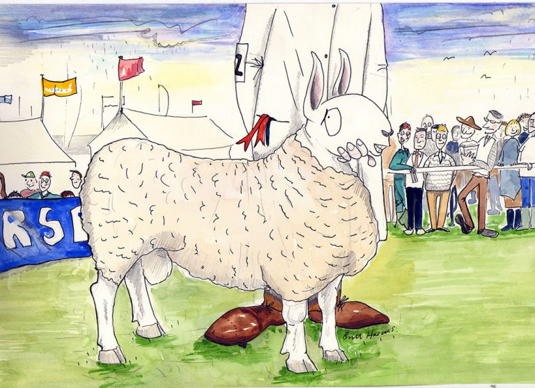 Britt Harcus sheep county show illustration